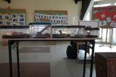 Galeria Żywa lekcja biologii - płazy